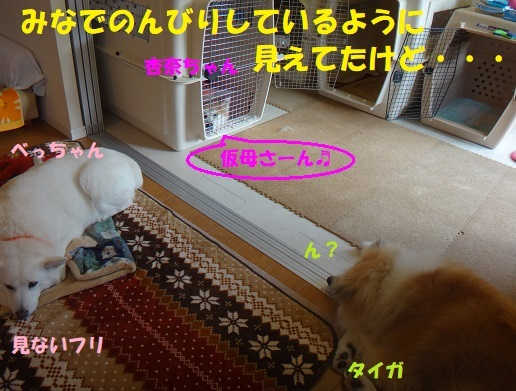 f0121712_07204720.jpg