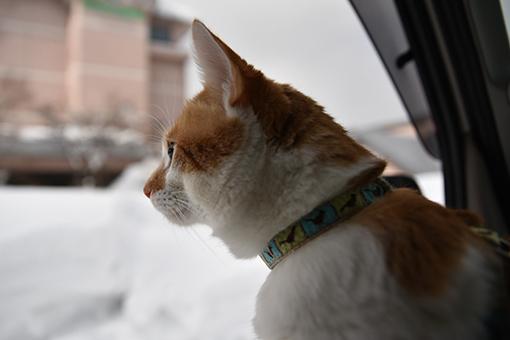 雪道走ってスタンプラリー♪_b0259218_06134534.jpg