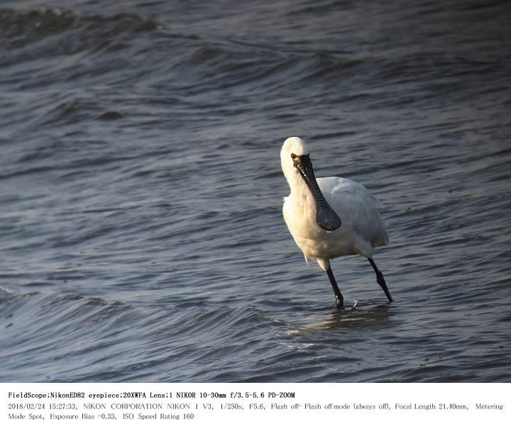 葛西海浜公園 2018.2.24(2)_c0062451_19483213.jpg