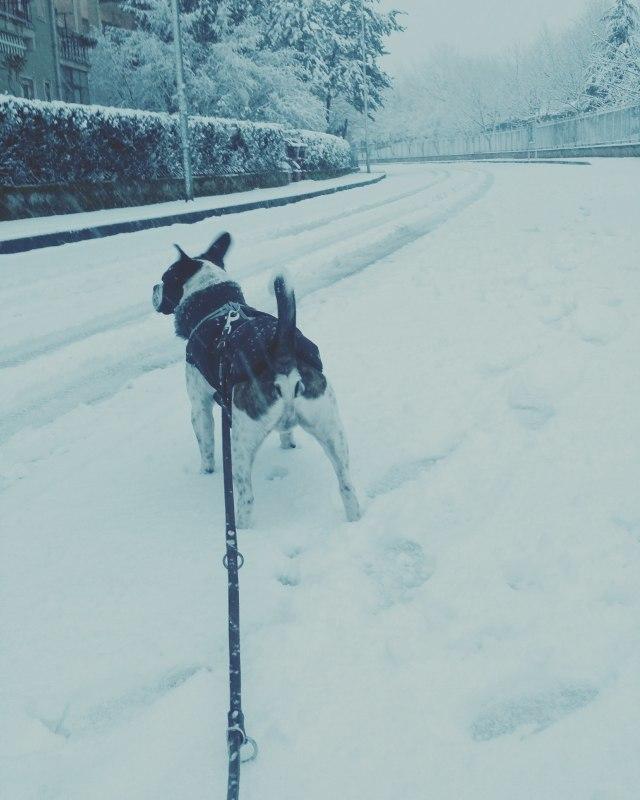ローマ県 雪です! : Via Bella ...