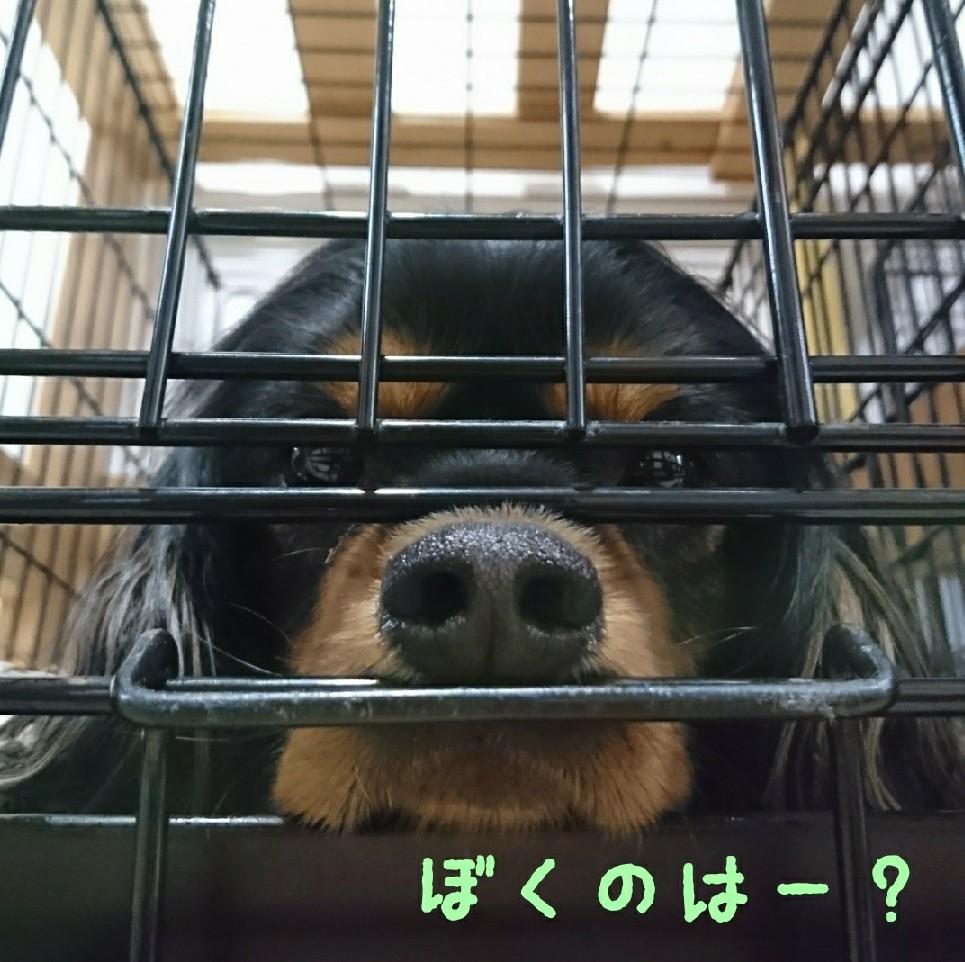 ぽかぽか陽気でピクニ..._f0357682_15455777.jpg