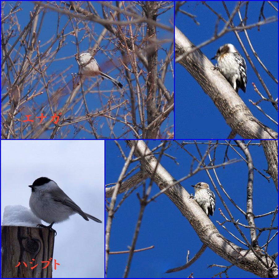 野鳥_d0162994_09404012.jpg