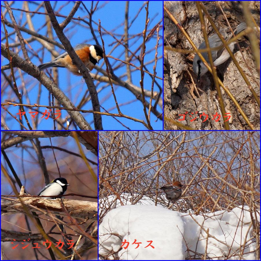 野鳥_d0162994_09405473.jpg