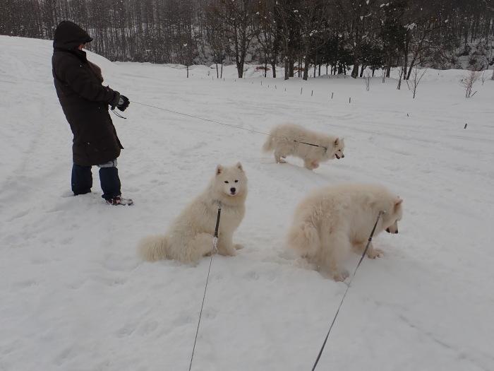 牧華 & 一色 雪遊び 2_a0049296_17564595.jpg