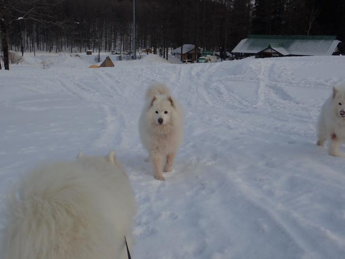 牧華 & 一色 雪遊び 2_a0049296_18102944.jpg