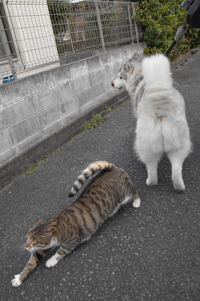 ひさしぶり!ロング散歩だよ~(前半)(*^_^*)_c0049299_21501783.jpg