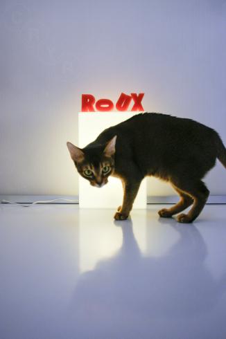 [猫的]Roux_e0090124_23315494.jpg