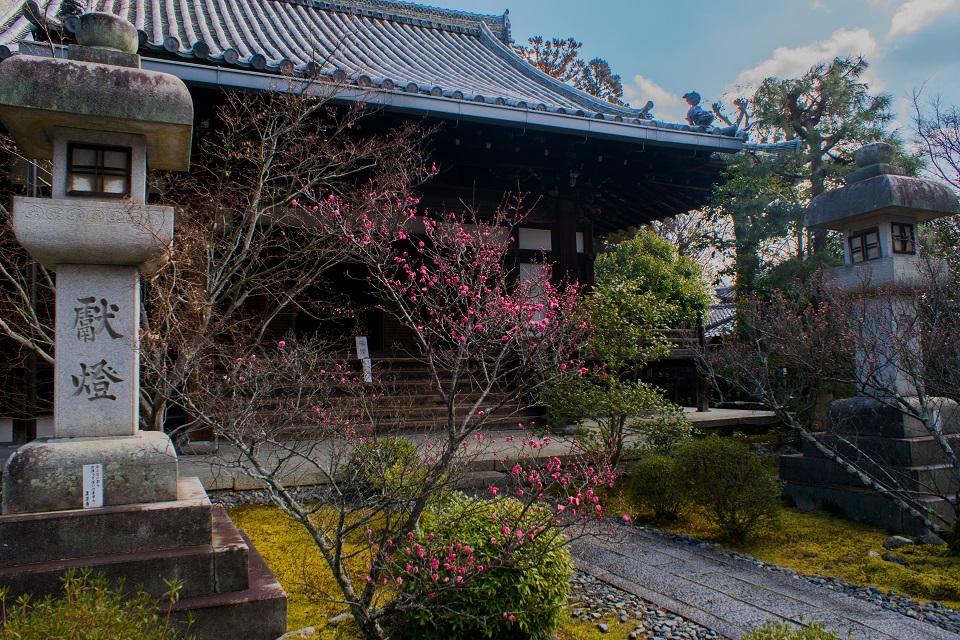 清凉寺の梅_e0363038_2152544.jpg