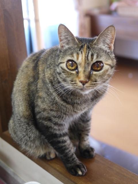 猫のお留守番 天ちゃん麦くん茶くん編。_a0143140_22283604.jpg