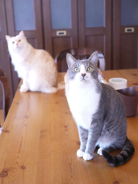 猫のお留守番 天ちゃん麦くん茶くん編。_a0143140_22290535.jpg