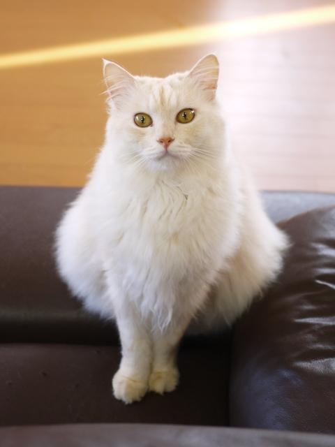 猫のお留守番 天ちゃん麦くん茶くん編。_a0143140_22292691.jpg