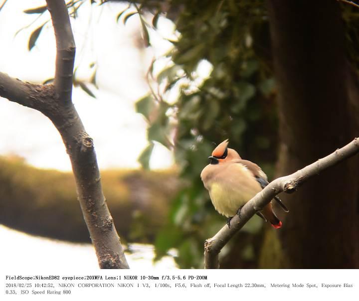 秋ヶ瀬公園・子供の森 2018.2.25_c0062451_20583012.jpg