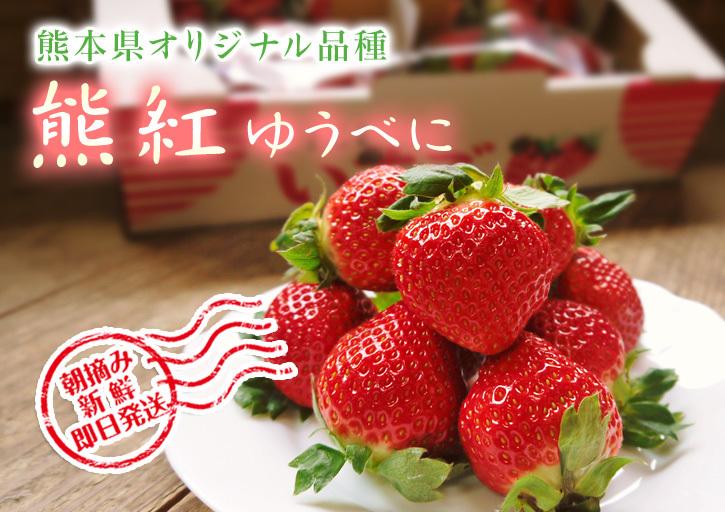 熊本イチゴ『熊紅(ゆうべに)』最旬です!美味しさにこだわり朝採り、即日発送で大好評販売中!_a0254656_17541937.jpg