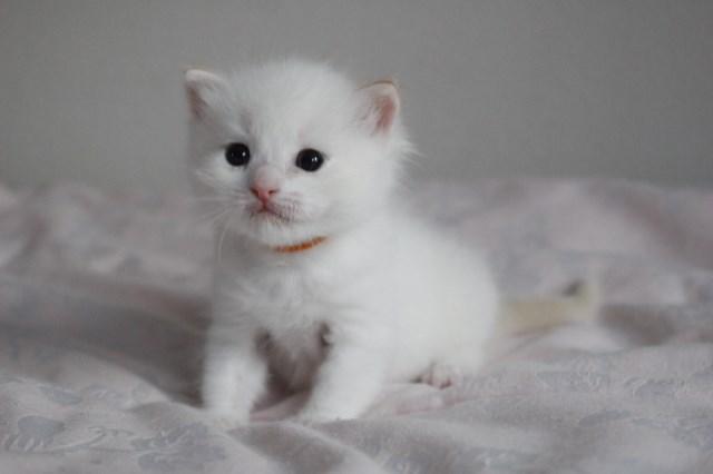 ベビニャンから仔猫ちゃんへ_a0285571_2239131.jpg
