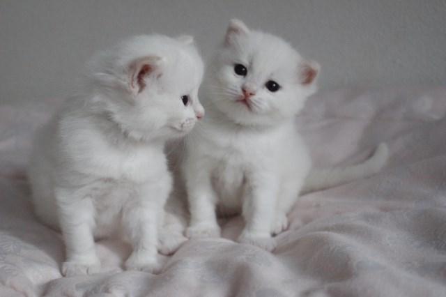 ベビニャンから仔猫ちゃんへ_a0285571_2239296.jpg