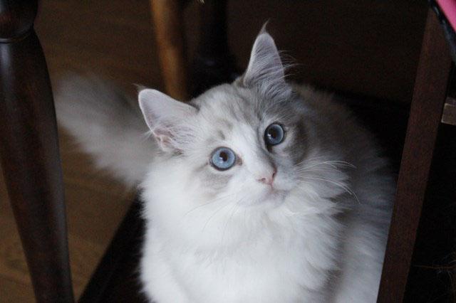 ベビニャンから仔猫ちゃんへ_a0285571_2240557.jpg