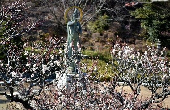 古刹、中山寺の梅林を訪れる_b0102572_18343970.jpg