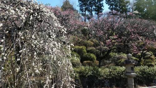 春の嵐?! 山菜 ふきみそ はまぐり ♪_c0248011_21475796.jpg