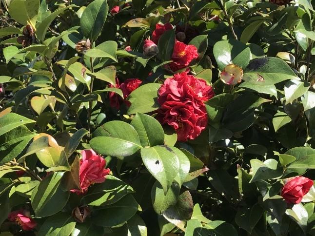 椿の絨毯とアトランタのフィールドから問題です。_b0365715_11012372.jpg