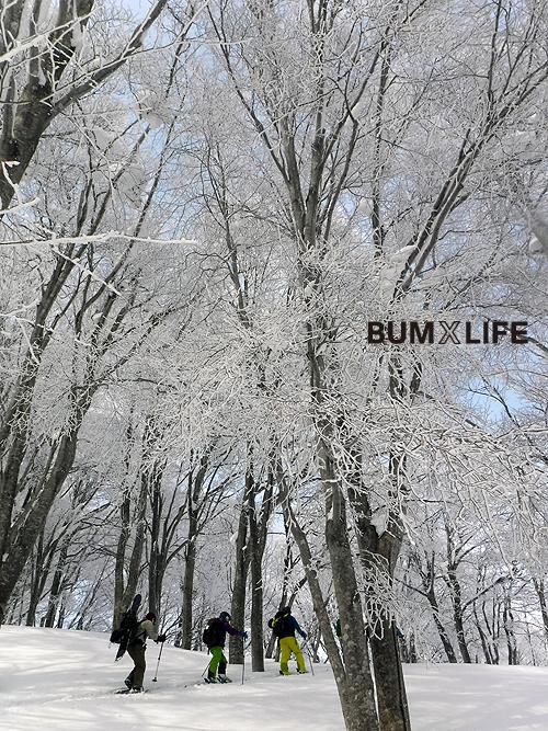 霧氷の森_d0147338_01000605.jpg