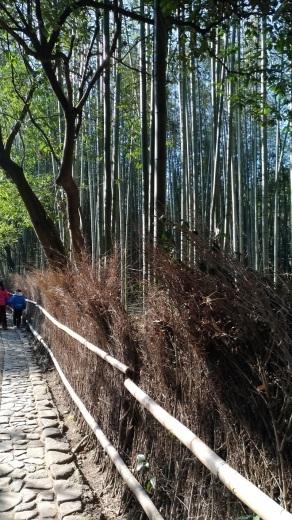 [京都旅行] 二日目 Eパート_a0054041_12372924.jpg