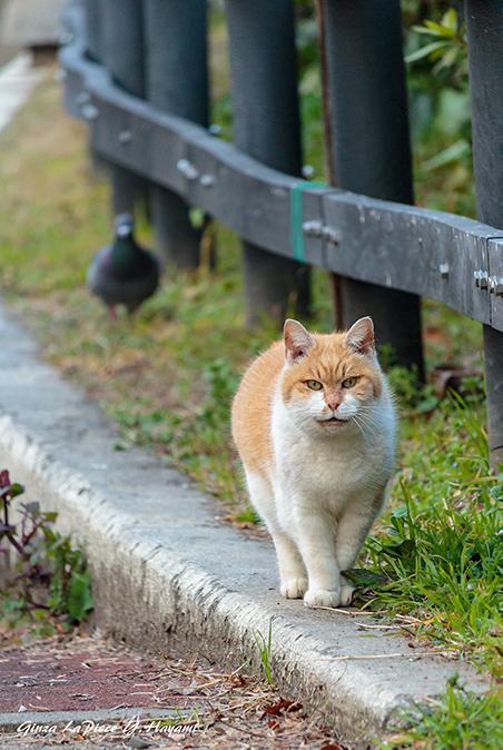 猫のいる風景 見つけたデブチン_b0133053_00175951.jpg