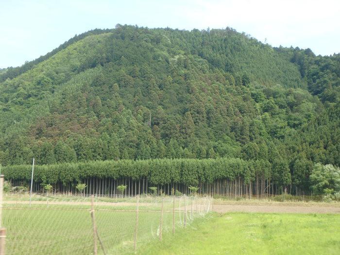京都の木は北山杉だけじゃない。ヒノキも良い。_e0384155_09432842.jpg