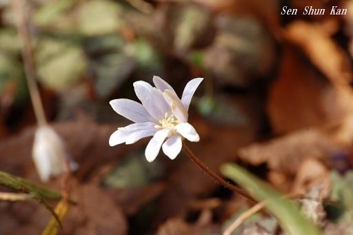 早春の草花展 その2_a0164068_16195952.jpg