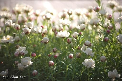 早春の草花展 その2_a0164068_16195992.jpg