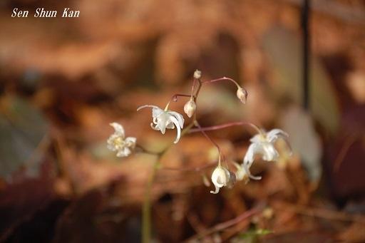早春の草花展 その2_a0164068_16200006.jpg