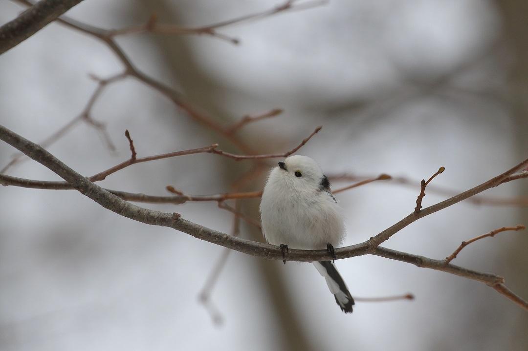 春の嵐到来・・・・・・・_c0295707_09423329.jpg