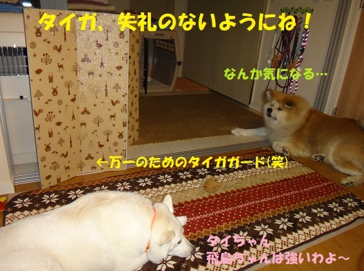 f0121712_23192378.jpg