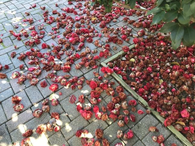 椿の絨毯とアトランタのフィールドから問題です。_b0365715_04373853.jpg