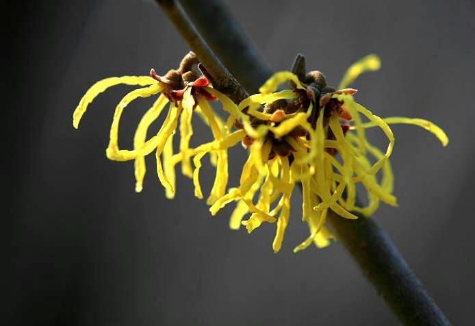 福島市自宅 「早春の花」_d0106628_13491226.jpg