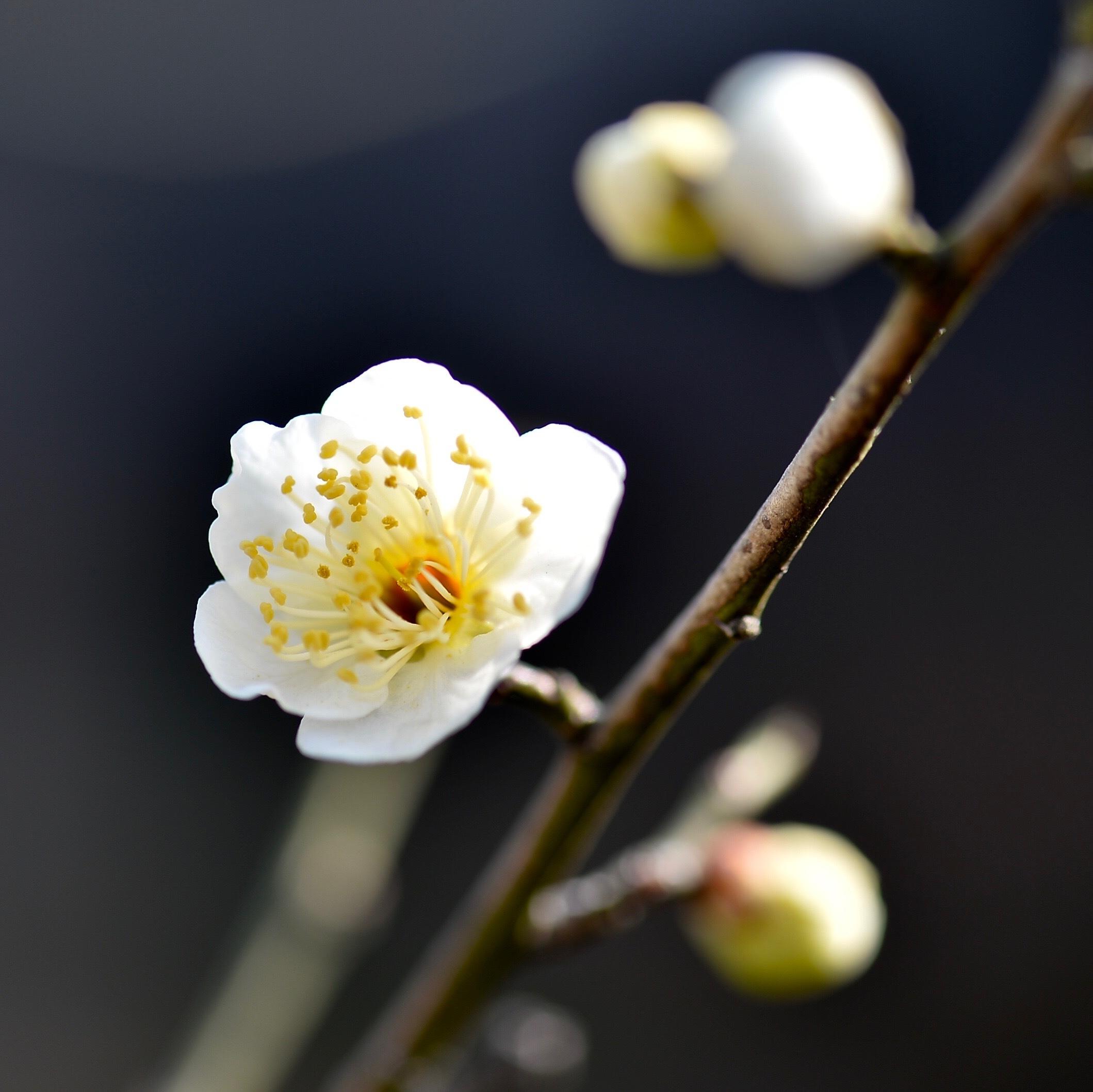 春一番も吹き荒れて..._f0099102_16213206.jpg