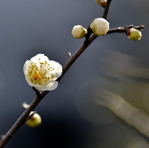 春一番も吹き荒れて..._f0099102_16214470.jpg