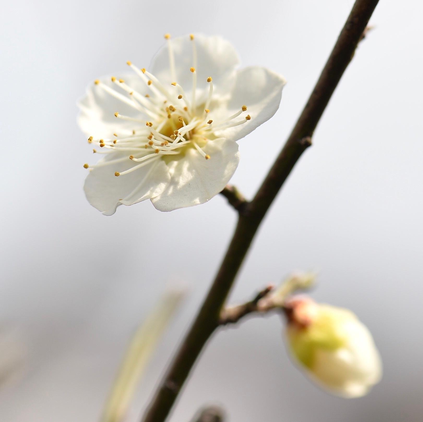 春一番も吹き荒れて..._f0099102_16220688.jpg