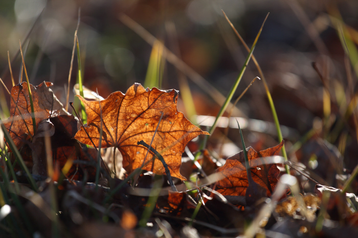 枯葉が歌うよ   _a0357206_22351211.jpg