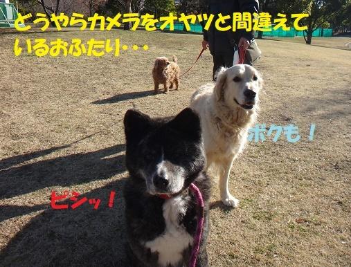 f0121712_14521027.jpg