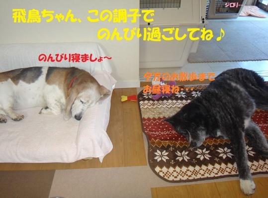 f0121712_15004651.jpg