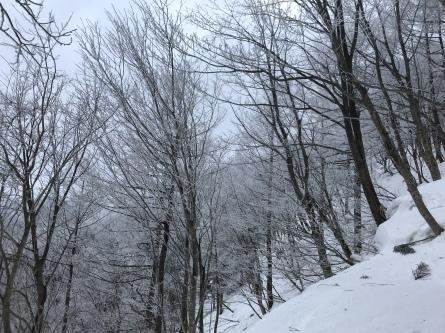 氷ノ山、ラッキーな山業!_f0101226_22060324.jpeg
