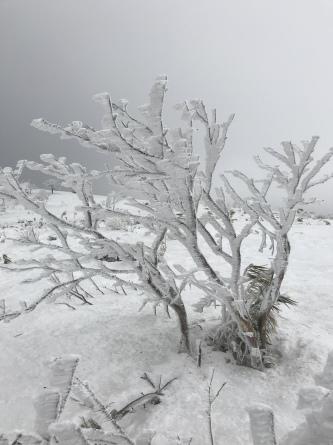 氷ノ山、ラッキーな山業!_f0101226_22123184.jpeg