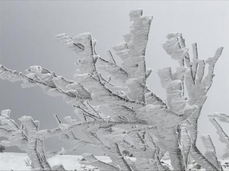 氷ノ山、ラッキーな山業!_f0101226_22124944.jpeg