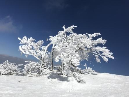 氷ノ山、ラッキーな山業!_f0101226_22144422.jpeg