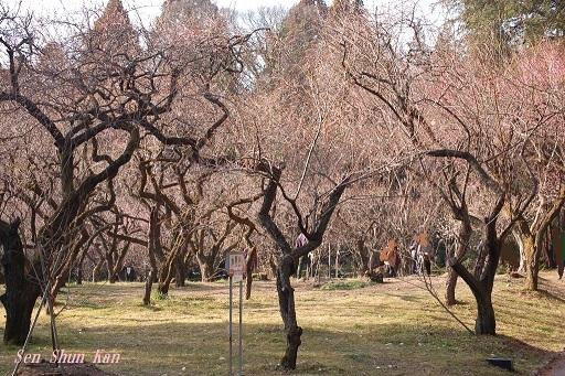 植物園の梅林 京都府立植物園 2018年2月27日_a0164068_22133193.jpg