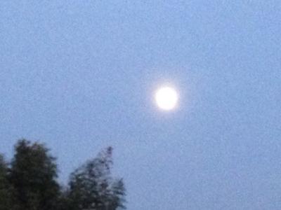 乙女座の満月と青い鳥***_e0290872_07322702.jpg