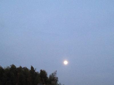 乙女座の満月と青い鳥***_e0290872_07322801.jpg