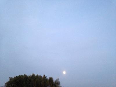 乙女座の満月と青い鳥***_e0290872_07322937.jpg
