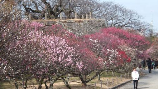 梅が満開! 福岡城址 舞鶴公園_b0214473_18422057.jpg