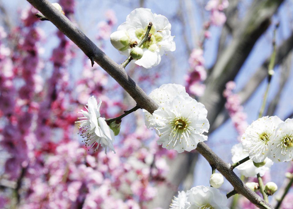春はもうすぐそこまで_a0155290_15171560.jpg